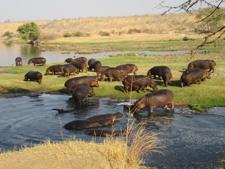 Die fabelhafte Tierwelt im Ruaha Nationalpark
